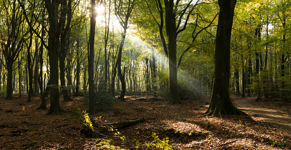 Netherlands「Sunlight beaming through forest, Speulderbos, Ermelo, Holland」:スマホ壁紙(1)