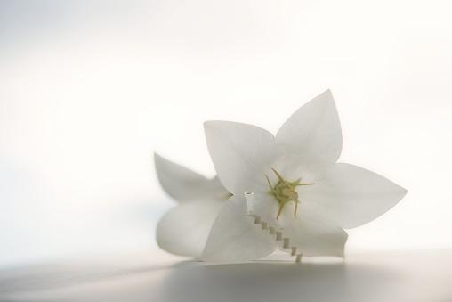 Paper Craft「White flowers home」:スマホ壁紙(5)