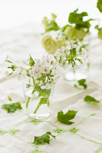 魅力的「White flowers with green leaves in jars」:スマホ壁紙(6)