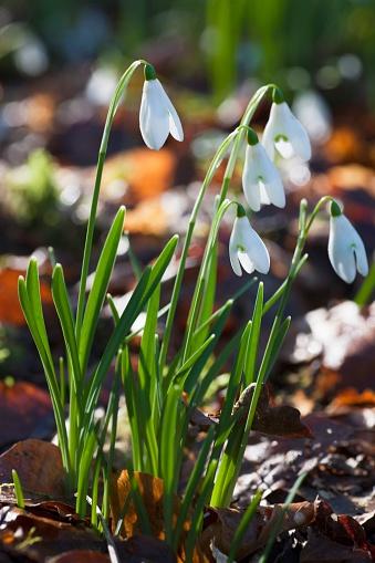 Drooping「White Flowers Drooping; Dumfries, Scotland」:スマホ壁紙(16)