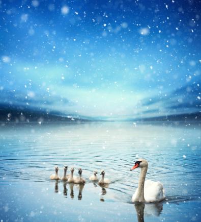 Frost「Swan Family」:スマホ壁紙(4)