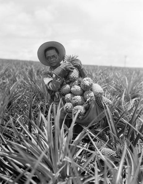Charles Phelps Cushing「Pineapple harvest」:写真・画像(10)[壁紙.com]