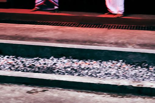 俳優「Fire walking on hot charcoals in Sri Lanka」:スマホ壁紙(5)