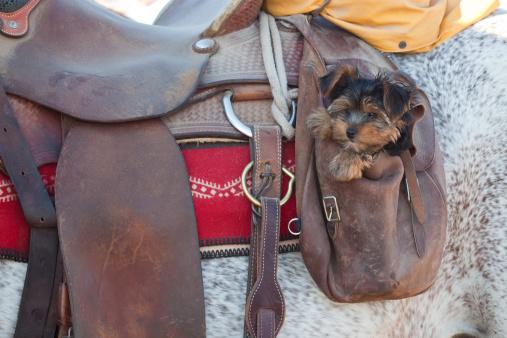 Recreational Horseback Riding「Little Dog in Saddle Bag」:スマホ壁紙(14)