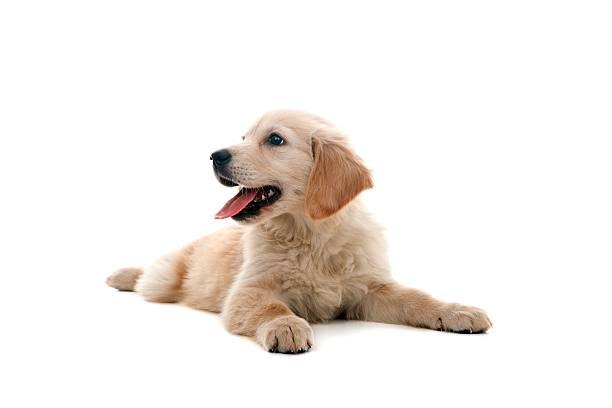 little dog:スマホ壁紙(壁紙.com)