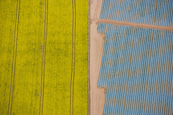 Abstract「Agriculture in yellow and blue, Wood Bevington Farm, Salford Priors, Warwickshire, 2007」:写真・画像(3)[壁紙.com]