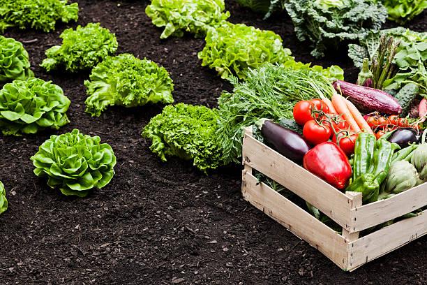 Agriculture:スマホ壁紙(壁紙.com)