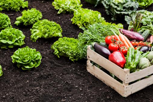 作物「農産物」:スマホ壁紙(9)