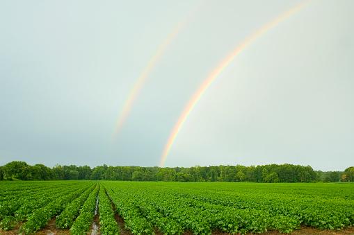 二重虹「Agriculture - Double rainbow above a mid growth cotton field in mid Summer / near Coffeeville, Mississippi, USA.」:スマホ壁紙(19)