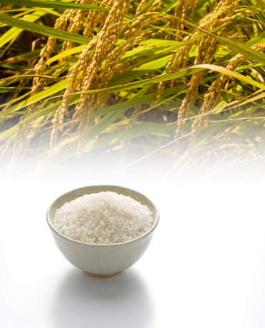Rice - Food Staple「Agriculture」:スマホ壁紙(13)