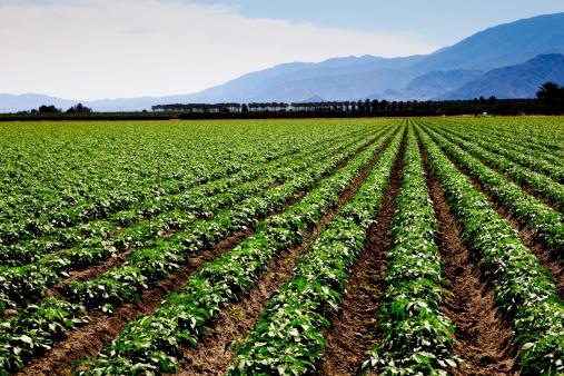 Plowed Field「Agriculture」:スマホ壁紙(3)