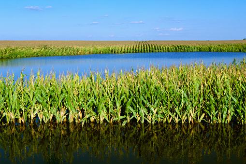 Hurricane Ike「Agriculture - Flooded cornfield caused by Hurricane Ike / near Elva, Illinois, USA.」:スマホ壁紙(14)