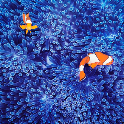 Animal Wildlife「Clown Fish」:スマホ壁紙(6)