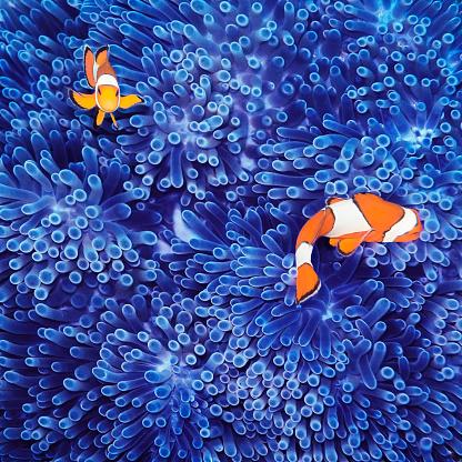 Tropical fish「Clown Fish」:スマホ壁紙(2)