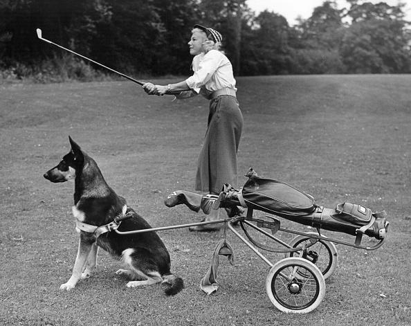 ゴルフ「Doggy Caddy」:写真・画像(2)[壁紙.com]