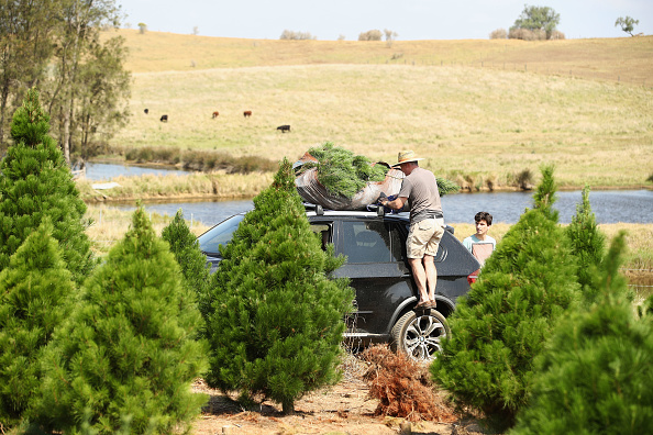 Rack「Sydneysiders Prepare For Holidays With Visit To Christmas Tree Farm」:写真・画像(13)[壁紙.com]