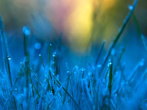 Frost「Frozen Dew 2」:スマホ壁紙(2)