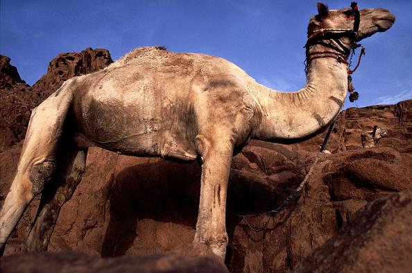 Working Animal「Bedouins」:写真・画像(7)[壁紙.com]