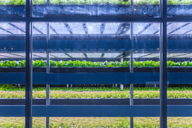 Racks of Cultivated Plant Crops at Indoor Vertical Farm:スマホ壁紙(壁紙.com)