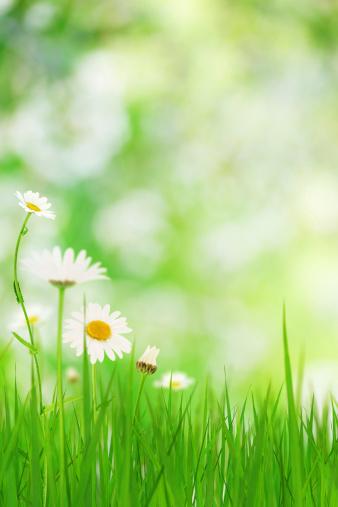 花畑「春の草地」:スマホ壁紙(1)