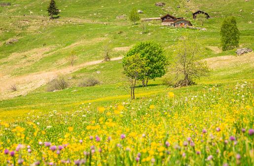 ピンク色「スイス アルプスの春の草原。」:スマホ壁紙(4)