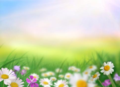 春「春の草地」:スマホ壁紙(8)