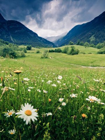 Austria「spring meadow with dramatic sky near steeg- tirol austria」:スマホ壁紙(12)