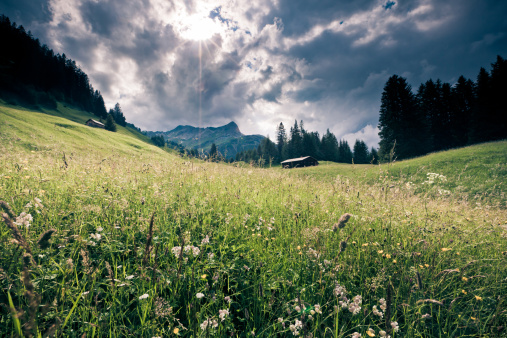Auto Post Production Filter「spring meadow with dramatic sky, tirol, austria- vintage filtered」:スマホ壁紙(0)