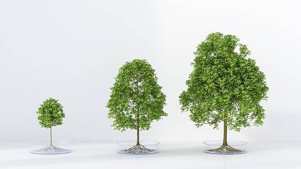 Trees growing in petri dish:スマホ壁紙(壁紙.com)
