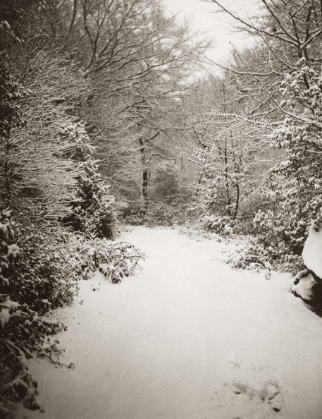 Tree「England Under Snow」:写真・画像(4)[壁紙.com]