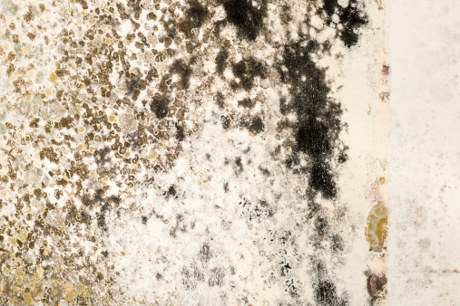 Fungal Mold「Mold Growth on Stained Plaster Wall Close-Up」:スマホ壁紙(4)
