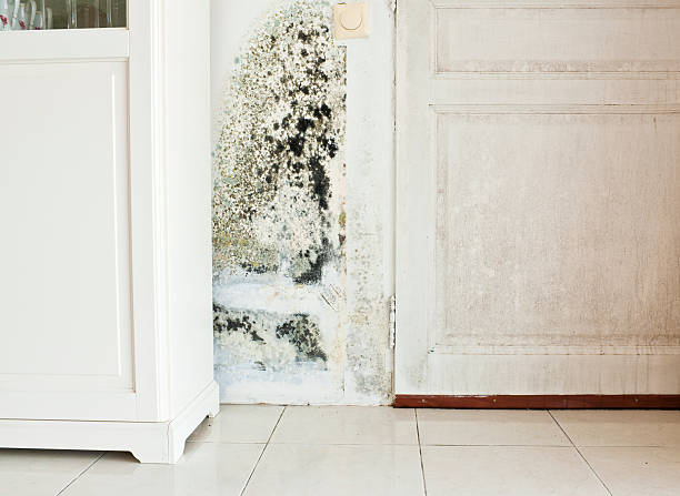Mold Growth on Wall and Damp Stained Wood Door:スマホ壁紙(壁紙.com)