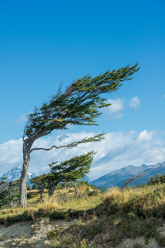 Eco Tourism「Typical flag tree in Tierra del Fuego, Patagonia」:スマホ壁紙(10)