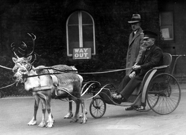 Reindeer Sledding「Reindeer Pull Cart」:写真・画像(7)[壁紙.com]