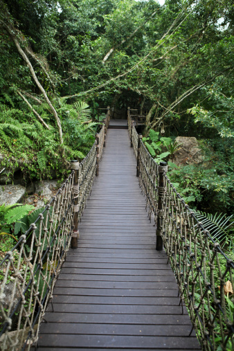 Amazon Rainforest「Rope Bridge in Forest - XXXLarge」:スマホ壁紙(7)