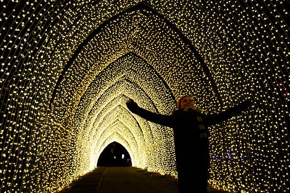 Christmas「Preview Of The Illuminated Installations Of Christmas at Kew」:写真・画像(11)[壁紙.com]