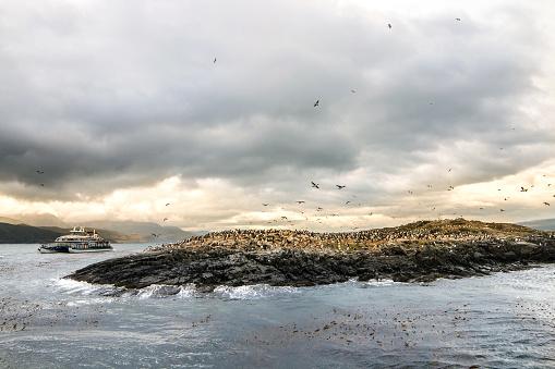 探求「パタゴニア - 島の鵜鳥のコロニーのビュー」:スマホ壁紙(5)