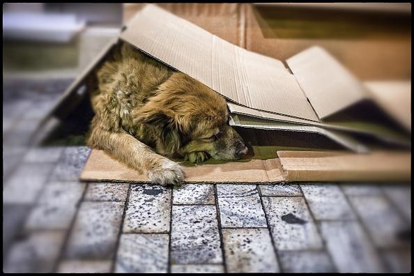 犬「Street Dogs Of Athens」:写真・画像(9)[壁紙.com]
