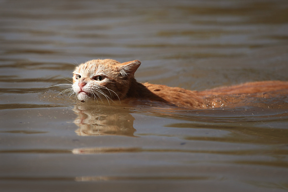 Animal「Epic Flooding Inundates Houston After Hurricane Harvey」:写真・画像(6)[壁紙.com]