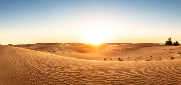 Desert in the United Arab Emirates at sunset:スマホ壁紙(壁紙.com)
