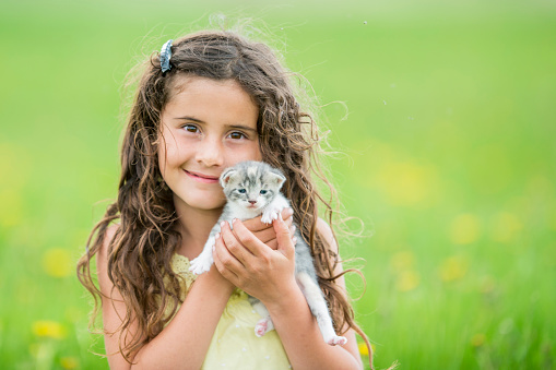 Kitten「猫を抱きしめる」:スマホ壁紙(2)