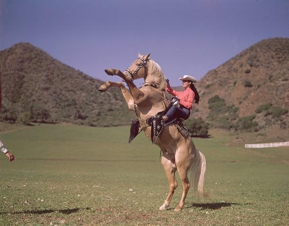 Working Animal「Sandra's Horse」:写真・画像(2)[壁紙.com]