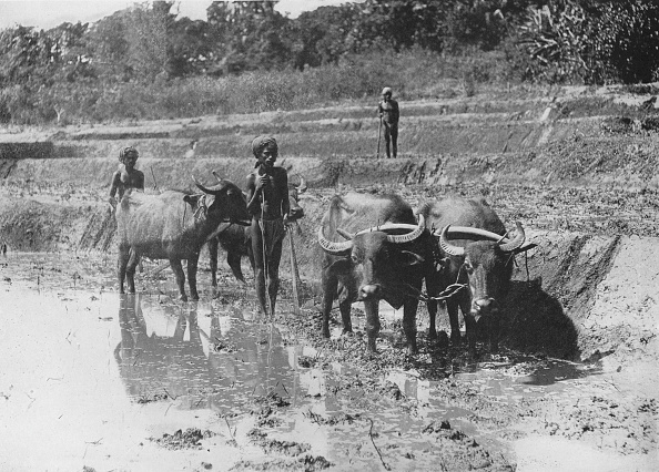 Crockery「'Buffaloes Ploughing Paddy Fields', c1890,」:写真・画像(12)[壁紙.com]