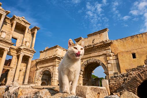 UNESCO「Turkey, cat of Ephesus」:スマホ壁紙(19)