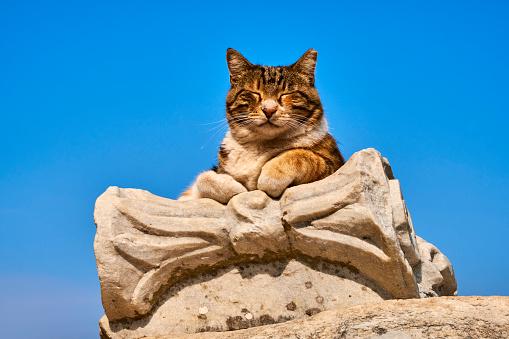 UNESCO「Turkey, cat of Ephesus」:スマホ壁紙(10)