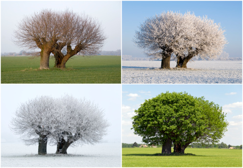 Four Seasons「Solitaire tree in four different seasons」:スマホ壁紙(4)