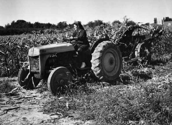 Farm「Corn Harvest」:写真・画像(3)[壁紙.com]