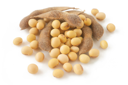 Legume Family「soybean」:スマホ壁紙(5)