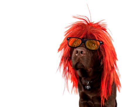 Pop Music「Punk Rock Dog」:スマホ壁紙(8)