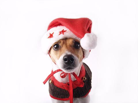 Dog Coat「Santas Elf」:スマホ壁紙(16)